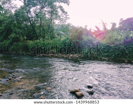Beautiful borneo river and the rainforest tropical.