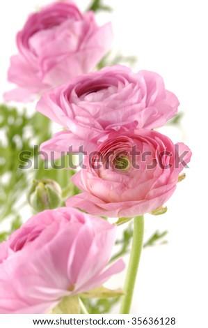 Beautiful bouquet - stock photo
