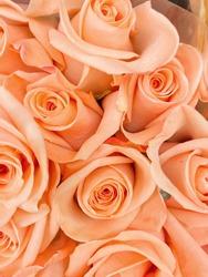 Beautiful bouquet bundle of peach color roses