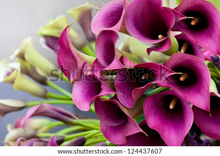 Stock Photo Beautiful bouquet of calla lilies. Abstract background.