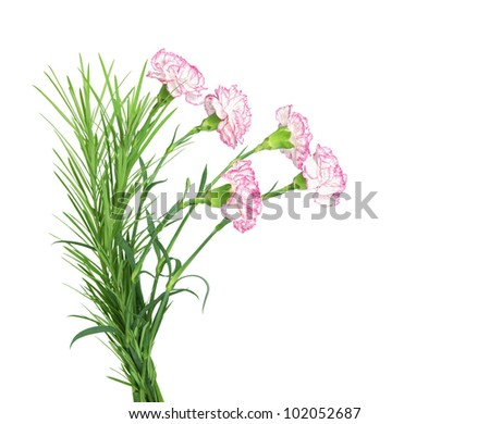 beautiful bouquet of carnations isolated on the white background
