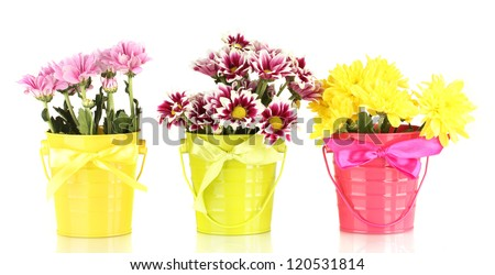 beautiful bouquet of chrysanthemums in a bright colorful buckets isolated on white