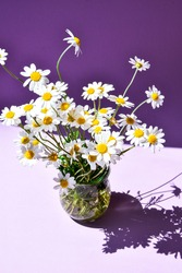 beautiful bouquet of daisies in glass vase on purple background, deep shadows