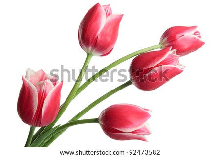 Beautiful bouquet of flowers on white background