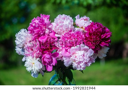 Beautiful bouquet of flowers peonies in a glass jar with water in garden, Ukraine. Red, pink and white peony albiflora or paeonia officinalis, close up
