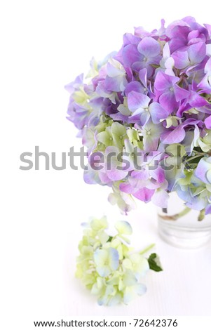 Beautiful bouquet of hydrangeas with glass vase on white isolated background