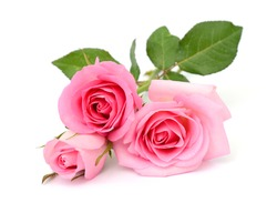 beautiful bouquet of pink rose flowers isolated on white background