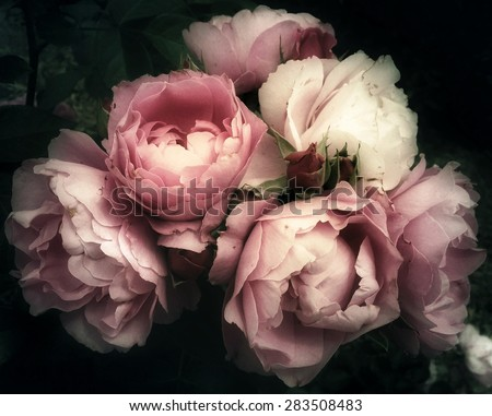 Beautiful bouquet of pink rose flowers on a dark background, soft and romantic filter