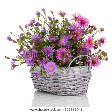 beautiful bouquet of purple flowers in basket isolated on white