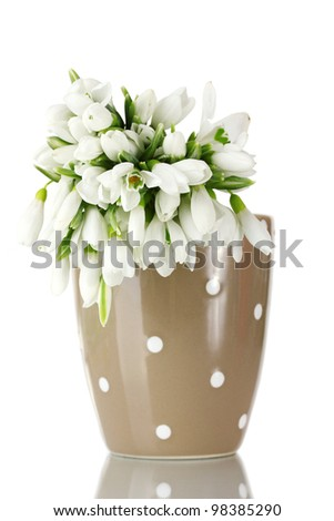 beautiful bouquet of snowdrops in brown vase isolated on white