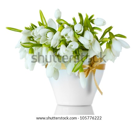beautiful bouquet of snowdrops in vase with bow isolated on white - stock photo