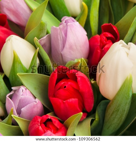 beautiful bouquet of tulips, different colors