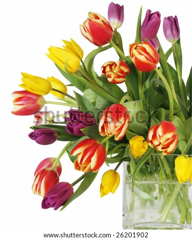 beautiful bouquet of tulips in square vase with clipping path