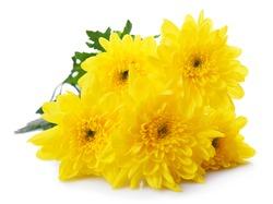 Beautiful bouquet of yellow chrysanthemum close up