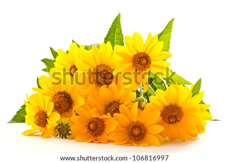 beautiful bouquet of yellow daisies on a white background