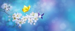 Beautiful branch of flowering apricot tree with yellow butterfly in blue or violet spring light background macro. Blue neon color image nature. Banner with copy space.