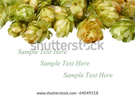 beautiful branches hop isolated on white background
