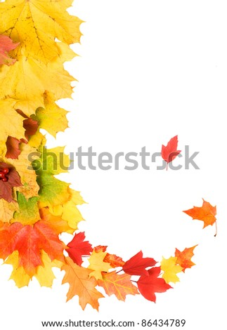 Beautiful bright autumn leaves isolated over white