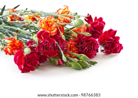 beautiful bright bouquet of carnations on a white background