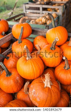 Beautiful bright colored pumpkins. Background from pumpkins. Halloween pumpkin. Festive Halloween concept and decoration. Top view. Autumn colors. Healthy and organic food. Raw, fresh vegetables #1401892679