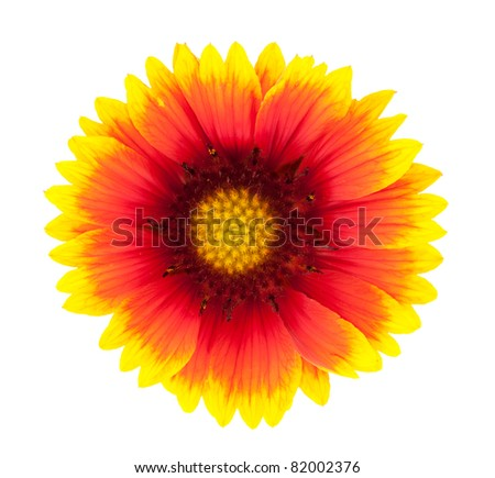 beautiful bright flower closeup isolated on white background