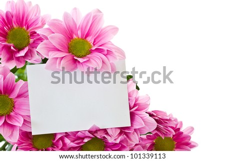 beautiful bright flowers Chrysanthemum on a white background