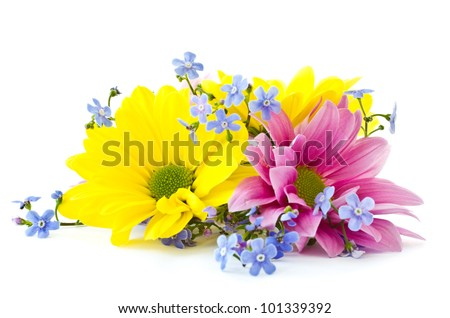 beautiful bright flowers Chrysanthemum on a white background