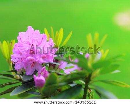 Beautiful bright flowers green background