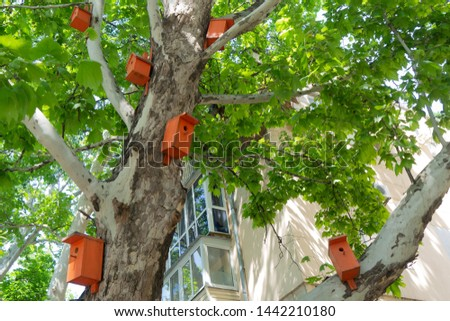 Beautiful bright orange birdhouses on the plane tree #1442210180