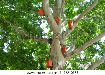 Beautiful bright orange birdhouses on the plane tree #1442210183