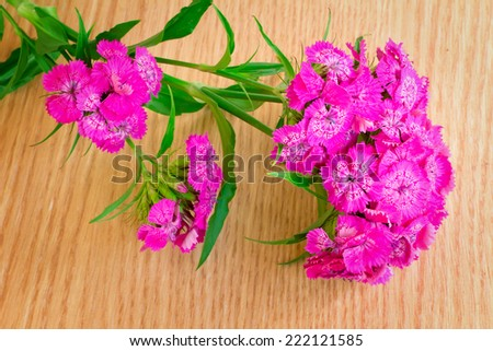 Beautiful bright pink flowers of a carnation. Are presented by a close up on a table against a silk cloth.
