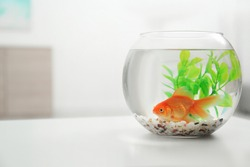 Beautiful bright small goldfish in round glass aquarium on white table indoors. Space for text