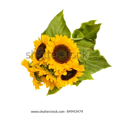 beautiful bright sunflowers isolated on white background