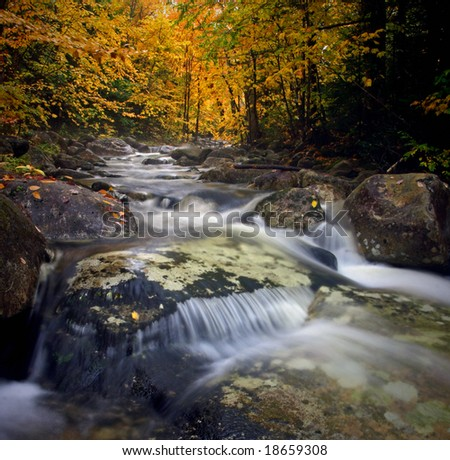 Beautiful brook flowing in the white mountain national forest during the fall in Gorham, New Hampshire.