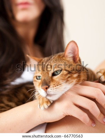 Beautiful Brown Cat Relaxing on Owners Lap and Hands