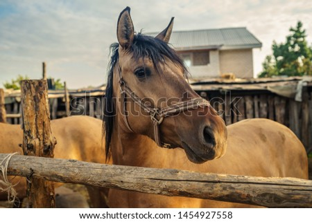 Beautiful brown horse in the paddock. Portrait of a horse. #1454927558