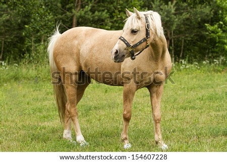 Beautiful brown horse pasturing in a rural landscape