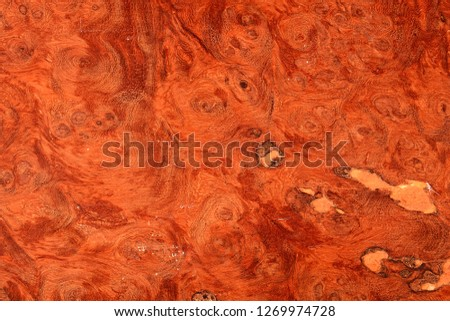 Beautiful brown red Carpathian Elm burl wood with natural voids in the unfinished laminated veneer surface.