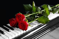 Beautiful bunch of red rose on piano keys, close up