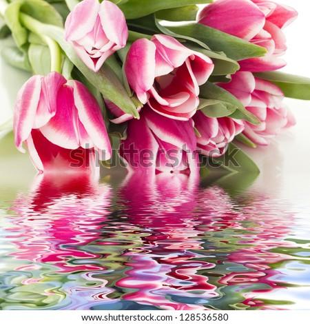 Beautiful bunch of tulips