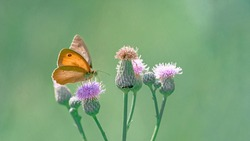 Beautiful burdock flowers with ant and orange butterfly in morning haze in clear nature close-up macro. Landscape wide format, copy space, cool green tones. Delightful pastoral artistic image.