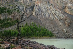 Beautiful burnt tree with black branches on shore of green mountain lake on background of high mountain wall with forest on rocks. Scenic landscape with burned tree on water edge of mountain lake.