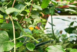 Beautiful butterflies at butterfly home