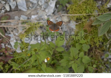 Beautiful butterfly also known as flying gems because of their beautifully colored wings. #1181889220