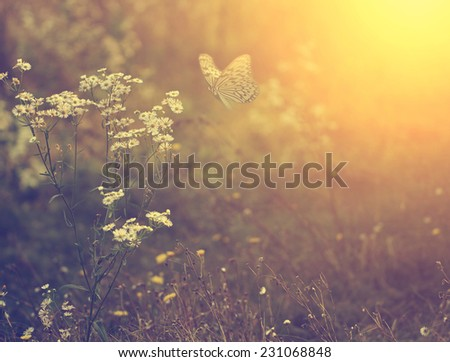 Stock Photo Beautiful butterfly and flower