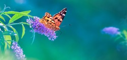 Beautiful butterfly and lilac summer flowers on a background of green blue  foliage in a fairy garden. Macro artistic image. Wonderland. Banner format. Copy space.