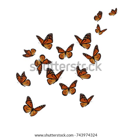 Beautiful butterfly flying isolated on white background.