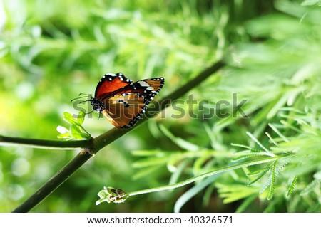 beautiful butterfly in a garden