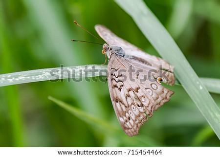Beautiful butterfly in flower garden