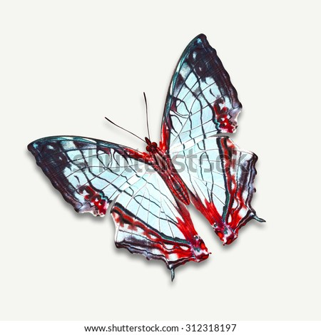 Beautiful butterfly isolated on white background,isolated on white background, with clipping path